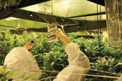 Surna Inc.'s light reflectors are part of a package of new technology that is improving the yield of cannabis production while using less energy. Image courtesy Surna Inc.